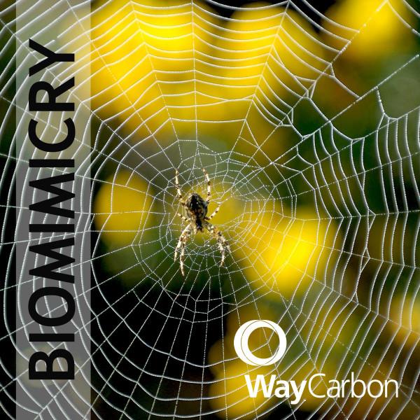 Biomimética inovação inspirada na natureza
