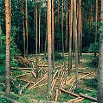 Desmatamento_WAYCARBON